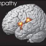 Участок мозга отвечающий за эмпатию